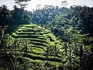 Đảo Bali Lọt Vào Top Điểm Đến Dành Cho Du Khách Độc Hành