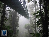 Rừng mây - Cloud Forest