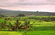 Thị Trấn Ubud