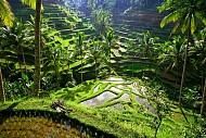 Trải nghiệm cuộc sống yên bình ở thị trấn UBud xinh đẹp khi du lịch Bali