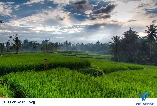 10 Điểm Tham Quan Nổi Tiếng Tại Hòn Đảo Bali
